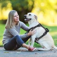 الكلب الياقات المقاود إيدج تسخير سترة مع سحب مقبض الحيوانات الأليفة الأمان مقعد حزام رحلة تنفس العاكس للكلاب 35