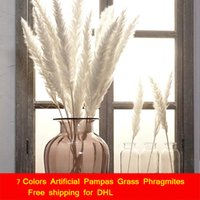 15 PZ / Bundle Pampas Erba Phragmites Flower Natural Secchi Secchi floreali Piante artificiali Decorazione della casa Ornamenti della pianta