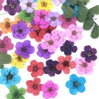 Декоративные цветы венки 50 шт. 6 мм Мини прессованный высушенный нарцисс сливовый цветок цветок для изготовления ногтей Арт ремесло DIY Handmade аксессуары S