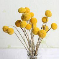 Pcs Dried Flower Craspedia Billy Balls Wedding Bouquet Yellow Branch Home Decoration Christmas Wreath DIY No Vase Decorative Flowers & Wreat