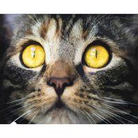 Pittura per numero Anni Animal Cat Numeri Paint DA TE Canvas Picture Pittura ad olio Decorazioni per la casa