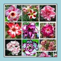Decorative Flowers Wreaths Festive Party Supplies Home & Garden10Pcs Adenium Obesum Desert Rose Flower (Not Artificial Flowers, Dried Flower