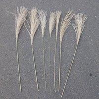 Dried Flower 50Pcs lot Wholesale Phrag Mites Natural Dried Decorative Pampas Grass For Home Wedding Decoration Flower Bunch 56-60cm 215 V2