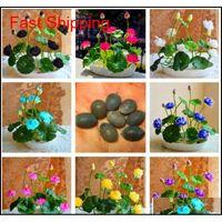 Outros suprimentos pátio, jardim de gramado! 5 pçs / bolsa tigela lótus lírio de água raro flor aquática sementes perennial planta bonsai para casa jardim drop d