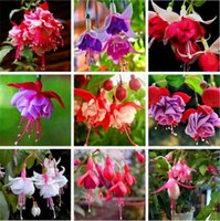 Fournitures de jardin 200 pcs / lot multiple couleur fuchsia chlorophytum lanternes graines de la lanterne de bonsaïs fleurs pour la maison plante intérieur plante graine de graines ZC140