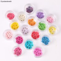 Decorative Flowers & Wreaths 100pcs Pressed Dried Narcissus Plum Blossom Flower With Box For Epoxy Resin Jewelry Making Nail Art Craft DIY A