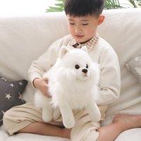 Quality Simulation Pomeranian Doll Cute Soft Realistic Animal White Dog Ragdoll Plush Toy Children's Birthday Gift 40x20cm DY50975