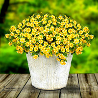 Lemon Slice Superbells Calibrachoa Petunia Annual Flower See...