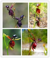 2015 HOT SALE 200pcs For Home & Garden Flying Duck Orchid Fl...