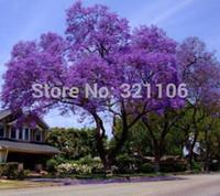 50 graines de Paulownia (arbre de princesse ou d'impératrice) - impressionnant et ajouter de la beauté à votre gard