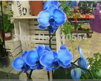 Редкая орхидея ! Бонсай балкон цветок бабочка Орхидея Мотылек Орхидея семена голубой DIY Главная сад Бесплатная доставка
