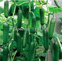 50 قطع بذور الخيار الفاكهة ، + هدايا سرية ، بذور cuke ، بذور الخضروات الخضراء شحن مجاني