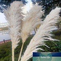 الأبيض الطبيعي ريد جافة زهرة كبيرة pampas العشب باقة حفل الزفاف الحديثة المنزل الديكور الخريف ديكور