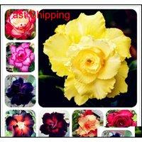 Other Supplies Selling Bonsai Adenium Obesum Balcony Flowers 2 Pcs Rainbow Desert Rose Seeds For Home Garden Easy To Grow Vcfpq Kpzlt