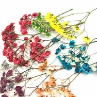 8Pcs Set Natural Dry Preserved Flower Pressed Dried Babysbreath For Scrapbook Bookmark Card Phone Case Decor DIY Crafts Material Decorative