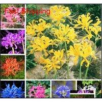Otros Suministros 100 PCS True Lycoris Lycoris Radiata Semillas Pérdida Flor Natural Crecimiento Natural Hermosa planta de Bonsai para DIY Home Garden MZA WXIU0