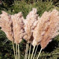 20 Stems Pampas Grass Bouquet Dried Flower Wedding Decorative Home Garden Party Christmas Decor Artificial Flowers Fall Decoration EWF8892