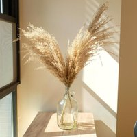 Dried Flowers Artificial Home Decor Pampas Grass Plants Bouquet Natural Reed Tall 20-22'' Wedding Decorative & Wreaths