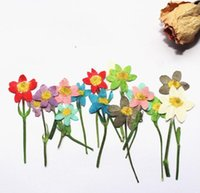 40pcs Pressed Dried Flower Lucky Bird Flower With stem For Epoxy Resin Jewelry Making Nail Art Craft DIY Bookmark Accessories