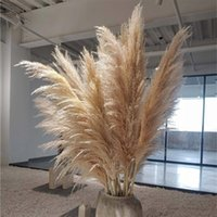 100pcs Wedding Flowers Pampas Grass Large Size Fluffy For Home Christmas Decor Natural Plants White Dried Flower Decorative & Wreaths
