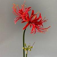 Lüks Dekoratif Çiçekler Çelenkler Kıyı Yüksek Simülasyon Çiçek Düzenleme Kapalı Ev Dekorasyon Fırtına Orkide Manghushahua Antik Stil Sihirli PoRograpy Sahne