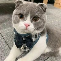 Escape Proof Cat Vest Hardness و Car Seat Belt Adapter قابل للتعديل شبكة ناعمة عاكسة ل Kittene Puppy E1 الياقات يؤدي