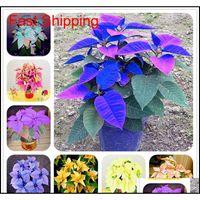 Övriga leverantörer uteplats, gräsmatta Garden 180 st Poinsettia frön, Euphorbia Pulcherrima, krukväxter, sällsynta blommande växter för hem deco