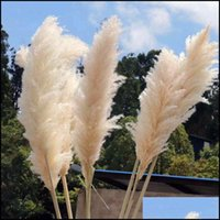 Dekoratif Çelenkler Şenlikli Parti Malzemeleri Garden200 adet 60-80 cm Beyaz Doğal Reed Kurutulmuş Çiçek Büyük Pampas Çim Buket Düğün Çiçekler CE