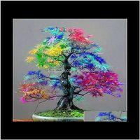 Dekorationen Terrasse, Rasen Drop Lieferung 2021 100Prente Echte 30 Stück / Tasche Samen Multicolor Bonsai Pflanze Blume Japanische Mini Ahornbaum PL