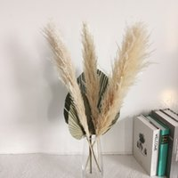 Large Pampas Grass 5PCS 80cm Natural Reed Dried Flower Branch Real Plants White Bouquet Wedding Ceremony Modern Home Decoration