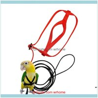 Collars Leashes Dog Supplies Home & Gardenpet Leash,Adjustable Parrot Bird Harness - Pet Anti-Bite Training Rope Outdoor Flying And Leash Dr