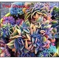 Autres fournitures Patio pelouse Accueil Jardin Drop Livraison 2021 Vente 100 pcs Succulents japonais Japonais Rare Intérieur Mini Cactus Flesinier Polygone FL