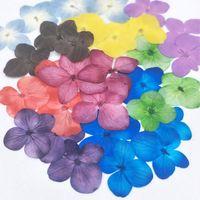 250 unids prensado secado absorbido hortensia teñida macrophylla flor plantas herbario para joyería estuche de teléfono Bookmark Postcarddiy