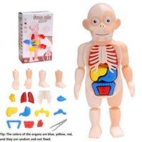 Montessori 3D puzzle corpo umano anatomia giocattolo educativo apprendimento educativo fai da te assemblato giocattoli kit corpo organo per il corpo strumenti didattici per bambini