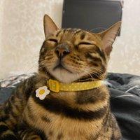 Sevimli Kişiselleştirilmiş Kedi Yaka Hızlı Yayın Özel Yavru Yavralar Çan Ile Oyulmuş Pet Kediler Kolye Aksesuarları için Kedi Köpek