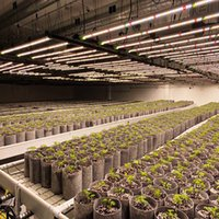 720W 640W Hydroponic Hearlight Full Spectrum Indoor Plant تنمو ضوء LED بار البستنة البديل Gavita Pro 1700E