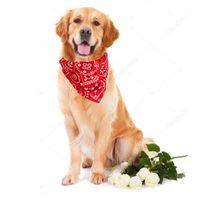 Dog Apparel Cooling Bandana Hond Adjustable Pet Triangular Bandage Puppy Cat Scarf Collar Bibs Neck Decor Dress Up Birthday