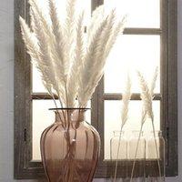 Dekoratif Çiçekler Çelenkler 15 adet Doğal Kuru Reed Beyaz Küçük Pampas Çim Fragmites Komünis Çiçek Demet Düğün Ev Decoratio