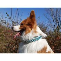 LeashesNew Commercio all'ingrosso 550 lb Fashion Arrow Cuoio di cuoio in tessuto Collari per cani Lisano Training Pendant Pet CollarbnR5