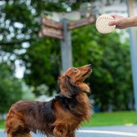 لوازم حيوانية صغيرة الكلب لعبة ستة كرات تنس دغة مقاومة الكلاب جرو تيدي التدريب المنتج المحمولة تنظيف الأسنان الكرة للحيوانات الأليفة المنزل