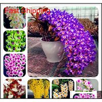 Otros Suministros Patio, Césped Home Garden 100 PCS / Embalaje Dendrobium Semillas Potted Flower Seed Variety Complete la tasa de cierbos 95pentcent M