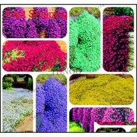 Andra leveranser uteplats, gräsmatta Hem Garden200 PCS Mixed Color Rock Cress Creeping Timme Fröer Flerårig mark är blomma för DIY Garden Decora