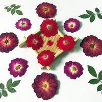 250 unids prensado Secado Chino Flor de Rosa / Plantas de Hoja Herbario para Joyería Bookmark Scrapbook Teléfono Funda Teléfono Vela Lampshade DIY