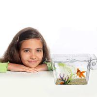 Aquariums Acrylic Transparent Fish Tank Breeding Isolation Box Aquarium Incubator Hatching Boxes Multifunctional Holder