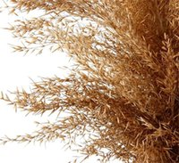 Hot Pampas Herbe Think Think Think Plume Fleur Bunch Petite Pampas Herbe Décor Mariage Accueil Véritable Pampas Grass Reed Natural Plant Ornements 544 V2