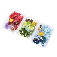 Real Mix Dried Flowers Plant For Resin Jewellery Dry Plants Pressed Making Craft DIY Po Frame Accessories Decorative & Wreaths