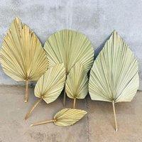 Dekoracyjne kwiaty wieńce 1 pc suszone kwiat naturalny pu fan liść dla DIY Home Shop Display Dekoracji Materiały konserwowane pozostawia drzewo palmy