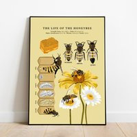 Antique Bees Prints Natural Poster Insects Vintage Biology Bee Wall Art Canvas Kids Educational Painting Life Cycle Dec Paintings