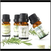 Aceites de calidad premium perfumado Fragancia Botellas de vidrio Pure O Fuego Aromaterapia Esencial Conjunto Esencial Difusores de aceite con 3xEw N3DSY