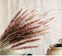 Real Plants Dried Small Pampas Grass Flowers Pantas Artifici...